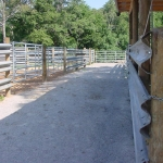This is the sorting alley way, with access to all of the four pens.