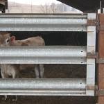 Guardrail Gate with Calf